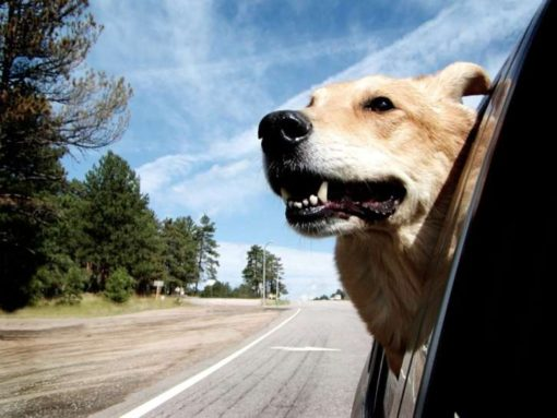 A Checklist for Traveling With Dogs